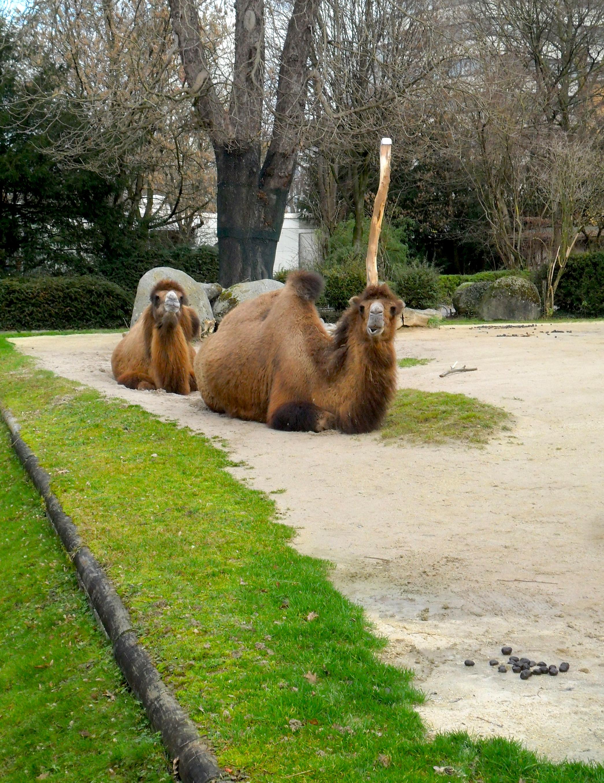 karlsruhe zoo jahreskarte