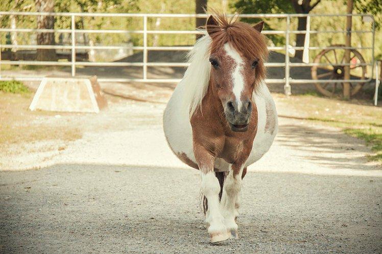 Pony_Gnadenhof