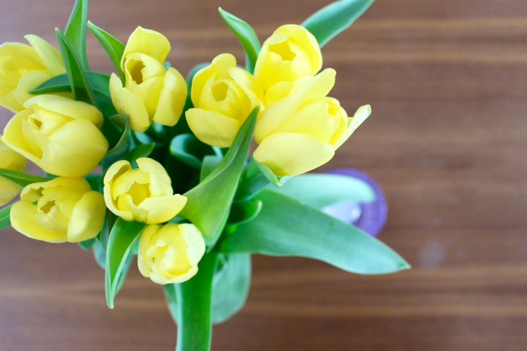 Frühjahrsputz Tulpen